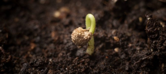 Faith- Plant the Seed and Watch it Grow